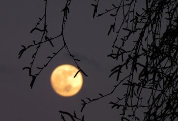 full_moon_moon_birch